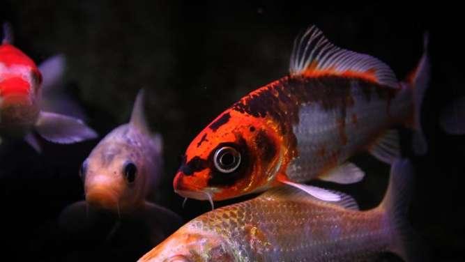 Fischteich im winter eisfrei halten tiere for Gartenteich im winter fische