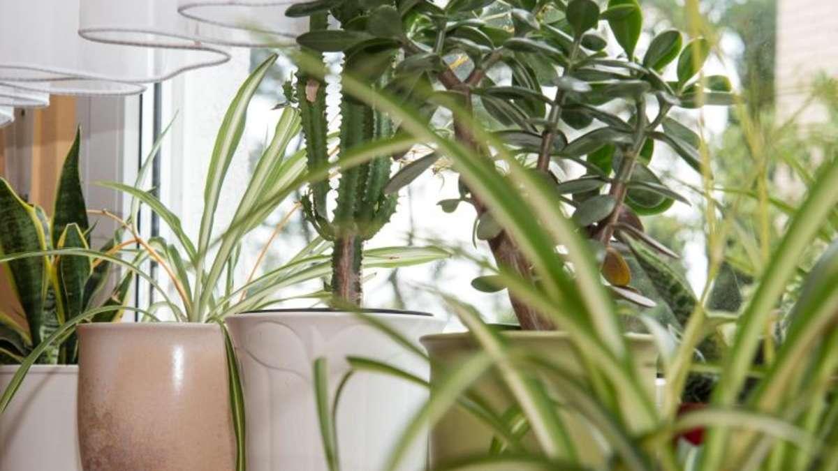 wie zimmerpflanzen das zuhause in eine gr ne oase verwandeln garten. Black Bedroom Furniture Sets. Home Design Ideas